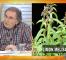 Sınav stresini azaltan bitki çayı