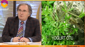 ibrahim saraçoğlu kırışıklıklar için yoğurt otu kürü