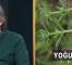 Zehirli guatr bitkisel tedavi