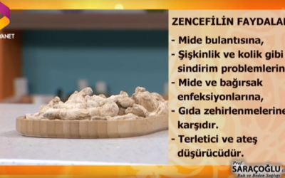 Zencefil kürü