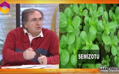 Zona hastalığına iyi gelen bitkiler