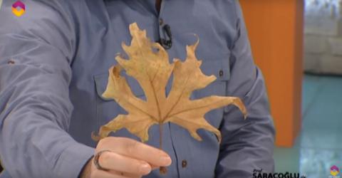 Çınar yaprağının faydaları