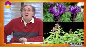 Prostat iltihabı bitkisel tedavi