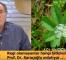 Primer amenore (adet görmeme) bitkisel tedavi